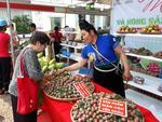 Son La Plum promotion week launched in Ha Noi