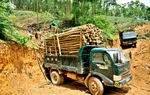 MARD gathers ideas for timber regulations