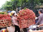 Viet Nam becomes second largest exporter of lychees