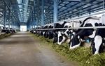 Vinamilk proposes to build second dairy farm in Ha Tinh