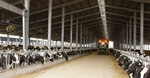 Quang Ninh eyeslarge-scale dairy project