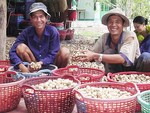 Mekong, south-east regions told to take advantages of technology andfavourable climate to develop mushroom production