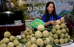 Chi Lang custard-apple promoted in Ha Noi
