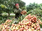 VN fruit, vegetable exporters need to be on top of Chinese policy changes