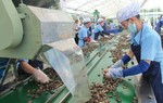 Eco-fair project launched to promote sustainable production