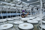 Annual textile and garment exports down for first time in25 years