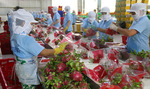 Local firms have advantages to promote trade with Eurasia region
