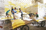 Viet Nam needs to promote brand building for rice exports