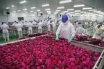 Fruit, vegetable segment needs revamp: agriculture minister
