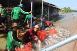 Tra fish exports likely to recover this year