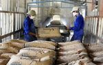 Cement producers face multiple problems