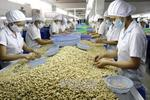 Binh Phuoc cashew processors face shortage of capital, raw materials