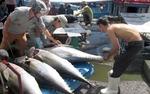 Tuna export market still unstable