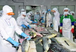 Seafood exports continue reduction in Q2