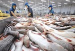Tra fish industry strives to increase domestic market share