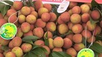 Hai Duong exports first lychees to Japan