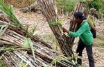 Viet Nam initiates anti-dumping investigation on corn syrup