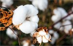 India looks to boost cotton exports to Viet Nam