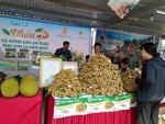 Son La to export $9 million of longan
