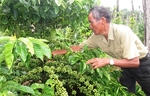 Viet Nam's first batch of coffee under EVFTA exported