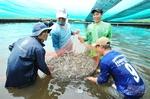 Bac Lieu should focus on hi-tech shrimp farming: deputy minister