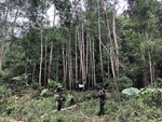 Forestry sector aims to gain $14b exports in 2021