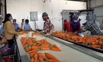 Efforts made to promote sale of crops in virus-hit provinces