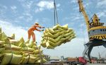 Vietnamese rice export price reaches record level