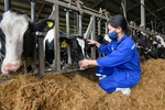 Viet Nam's dairy industry reaches out to the world