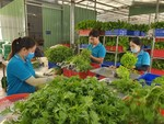 Agricultural co-operatives benefit hugely from investment in technology: experts