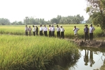 'Nature - based' farming a winner in Delta