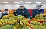 Exports of mango, guava and mangosteen to Russia soar