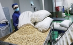 Raw cashew nut imports rocket in first four months