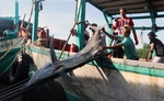 Viet Namcould loseUS$480 million per year due to illegal fishing