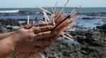 Viet Nam enterprises to say no to plastic straws