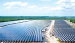 Renewable energy companies thrive on rising demand