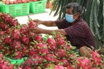 Measures sought to boost export of dragon fruit to India, Pakistan