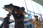 Viet Nam becomes largest tuna exporter of Israel