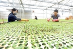 Digital transformation plays a vital role in agricultural development