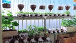 Vegetable seed shops grow strong thanks to social distancing