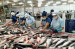 $149.4m programme to sustain aquaculture in Cuu Long Delta