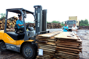 Chinese buyers depleting VN's raw lumber