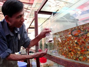 City to export 40m ornamental fish