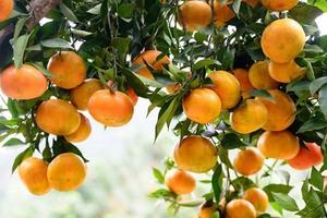 Hưng Yen to host orange week