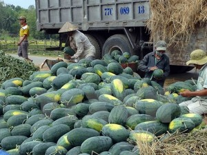 VN-China firms ink watermelon trade contract