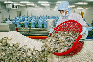 Frozen shrimp exports to RoK must undergo quarantine