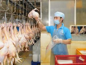 Vietnamese chicken breasts to be exported to Japan
