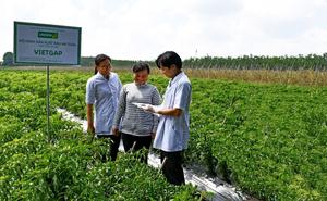 UNIBEN helps farmers follow VietGAP standards
