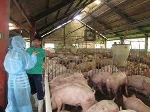 Teamwork needed in animal husbandry