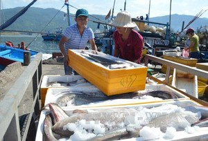 Domestic consumption of seafood trending upwards